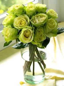 Chartreuse-Roses-1dz